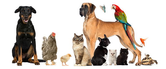 Join the Gold Coast Pet and Animal Expo 2014