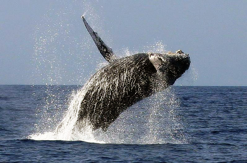 Don't Miss the Whale Watching Season!