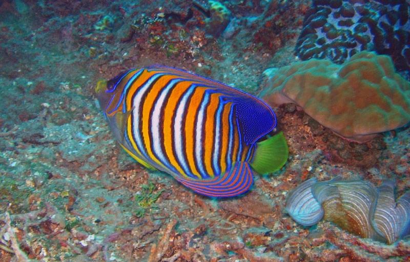 Gold Coast Diving Sites