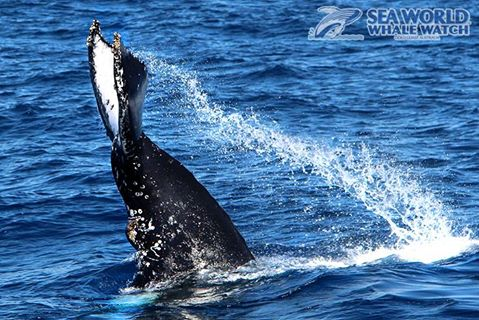 Check Whale Watching Off Your Bucketlist this Year!